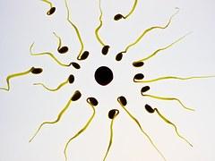 sperm-956481__180