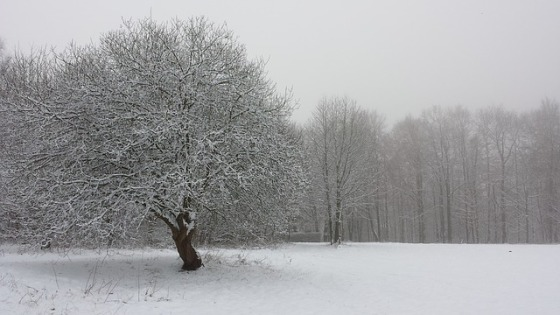 winter-752903_640